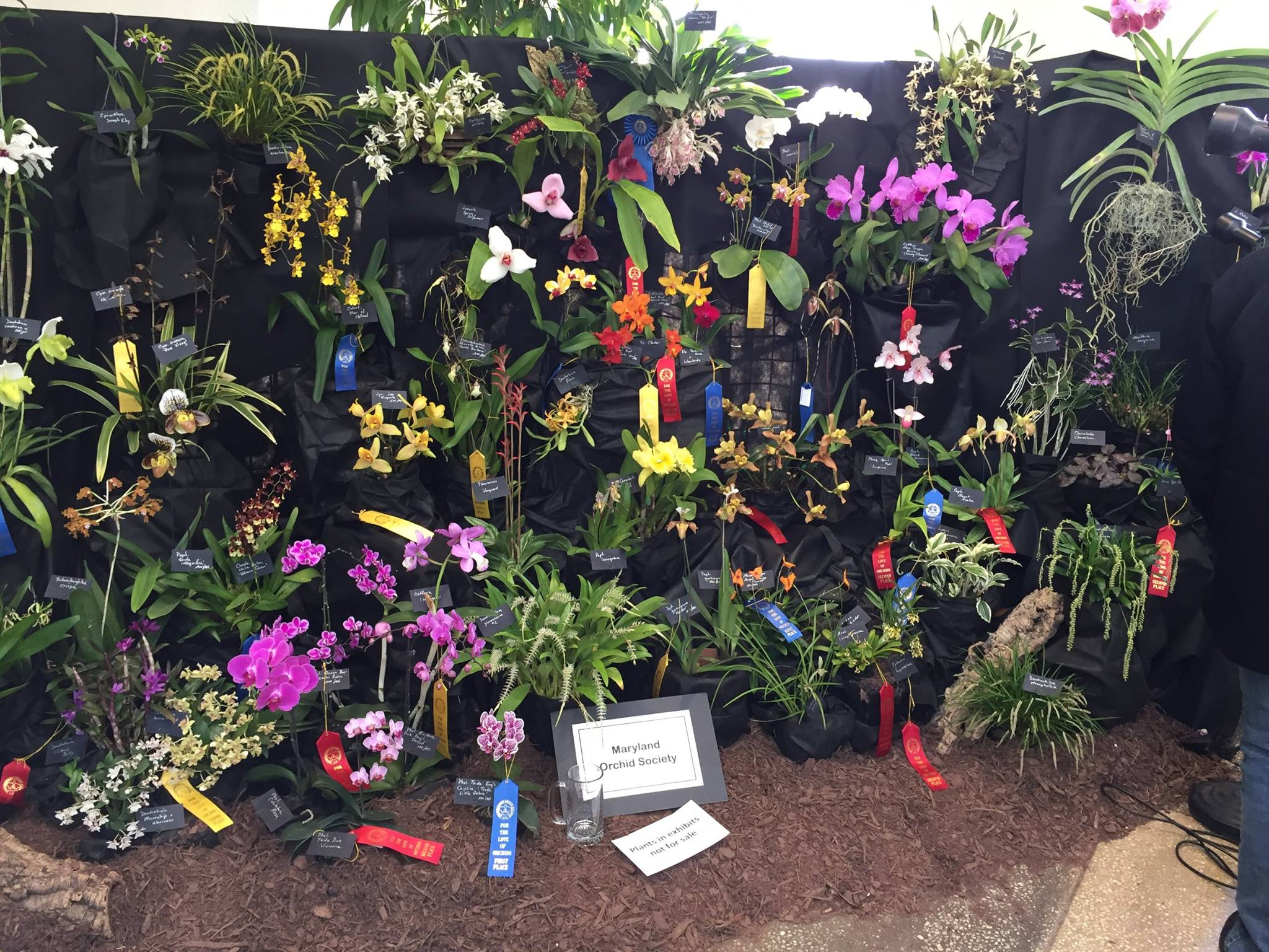 Maryland Orchid Society display at the Susquehanna Orchid Society Show 2017